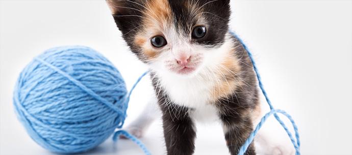 Brincadeiras felinas: fique atento