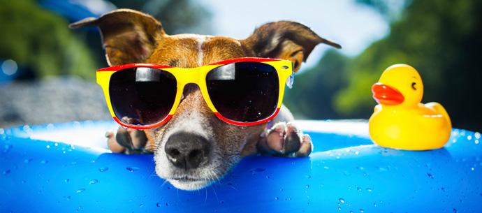 Verão, temperaturas elevadas, um perigo para os cães!